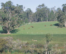 Scenic Drives - Bunbury Collie Donnybrook - Winery Find