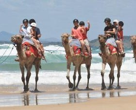 Camel Rides with Coffs Coast Camels - Winery Find