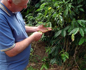 Wombah Coffee Plantation - Winery Find