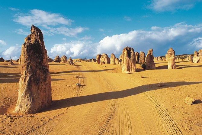 Pinnacles Desert Koalas and Sandboarding 4WD Day Tour from Perth - Winery Find