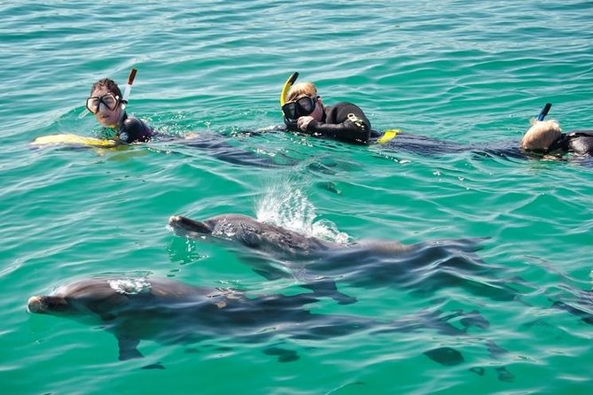 Swim with Dolphins Day Trip from Perth - Winery Find