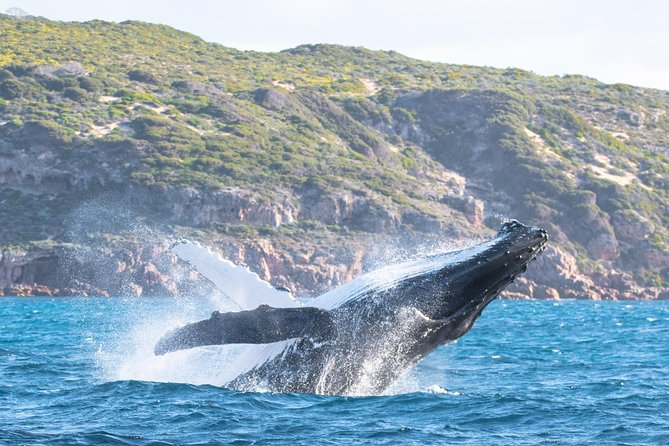 Jet Boat Whale Watching Safari from Dunsborough - Winery Find