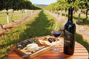 Granite Belt and Darling Downs - Winery Find