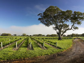 Penola Coonawarra Tour Services - Winery Find