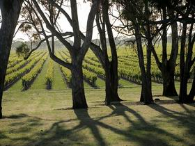 Henry's Drive Vignerons - Winery Find