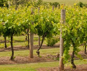 Mt Coghill Vineyard - Winery Find