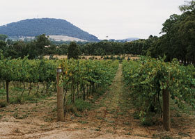 Mount Buninyong Winery - Winery Find
