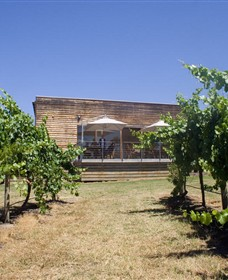 Shantell Vineyard - Winery Find