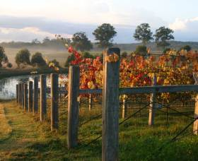 Roses Vineyard at Innes View