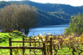 Lake Barrington Estate Vineyard