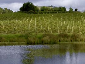 Brook Eden Vineyard