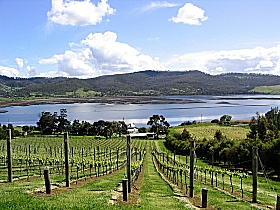 Derwent Estate Wines