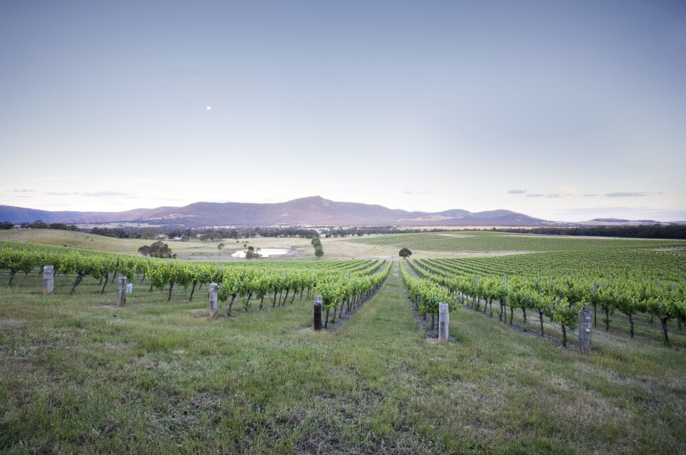 Mount Langi Ghiran - Winery Find