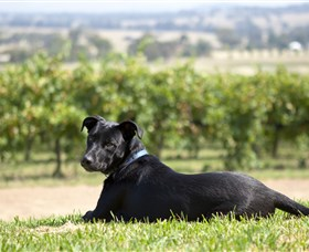 Moothi Estate Vineyard and Cellar Door - Winery Find