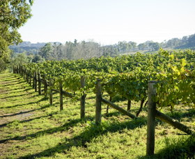 Surveyor's Hill Vineyards